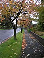 Leafy footpath, Omagh - geograph.org.uk - 1546066.jpg