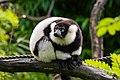 Lemur (26245292599).jpg
