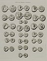 Leontium, Megara, Camarina - Saint-non Jean Claude Richard Abbé De - 1786.jpg