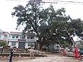 Lian Tang Cun, Wang Jia Cun, Lian Tang Xian, June 16, 2012 - panoramio (3).jpg