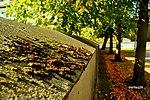 Lichen (16422146235).jpg