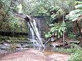 Lilydale Falls, Tasmania.JPG