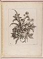 Livre de Toutes Sortes De Fleurs D'apres Nature MET DP210739.jpg