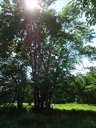 Loantaka Brook Reservation - Image: Loantaka Brook Reservation bikeway tree with sunlight breaking through