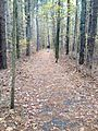 Loblolly Trail near Raccoon Pond, Laurel Delaware, USA 01.JPG