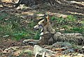 Lobo-Naturlandia (2).jpg