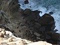 Lobos marinos - panoramio.jpg