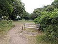 Long shot of the bench (OpenBenches 7215-1).jpg