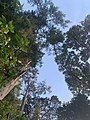 Look up and enjoy.jpg