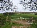 Looking towards Auster Wood - geograph.org.uk - 399634.jpg