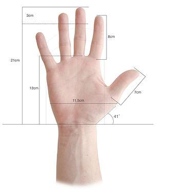 Louis Bolk - Hand Meassurements based on the Louis Bolk's fetallization theory