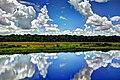 Lovely Savannah View - panoramio.jpg