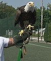 Ludogorets mascot fortuna.jpg