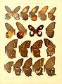 Macrolepidoptera15seit 0095.jpg