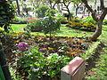 Madeira em Abril de 2011 IMG 1723 (5663181721).jpg
