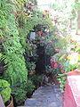 Madeira em Abril de 2011 IMG 1803 (5664233782).jpg