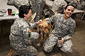 Man's best friend helps NC Guardsman with PTSD 140111-Z-GT365-161.jpg