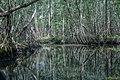 Mangrove Moule.jpg