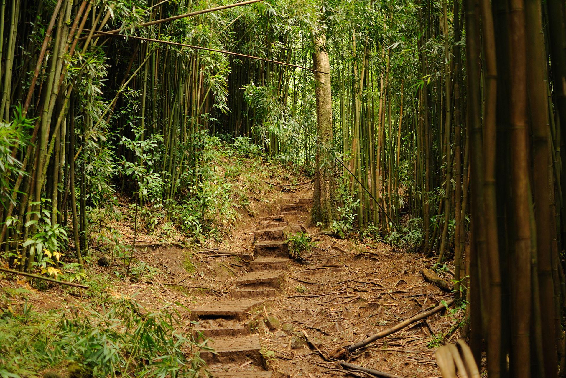 Manoa Falls Trail - Wikipedia