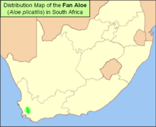 Map of Fan Aloe A plicatilis in South Africa.png