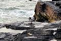 Marine bird21.jpg