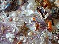 Marine life,Корален морски свет.JPG