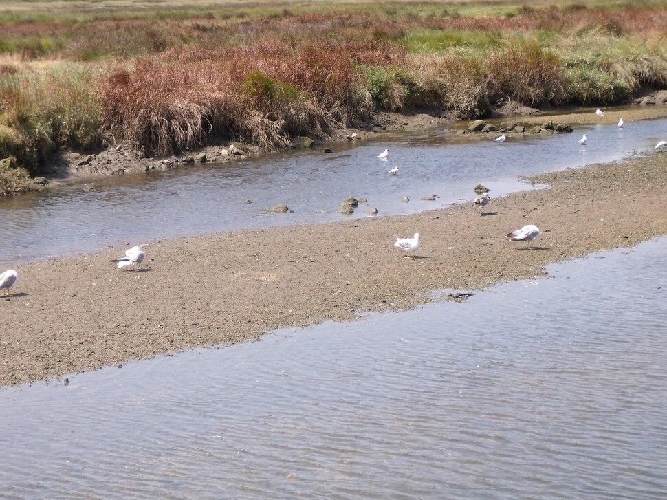 Marisma do río Lagares, agosto 2011