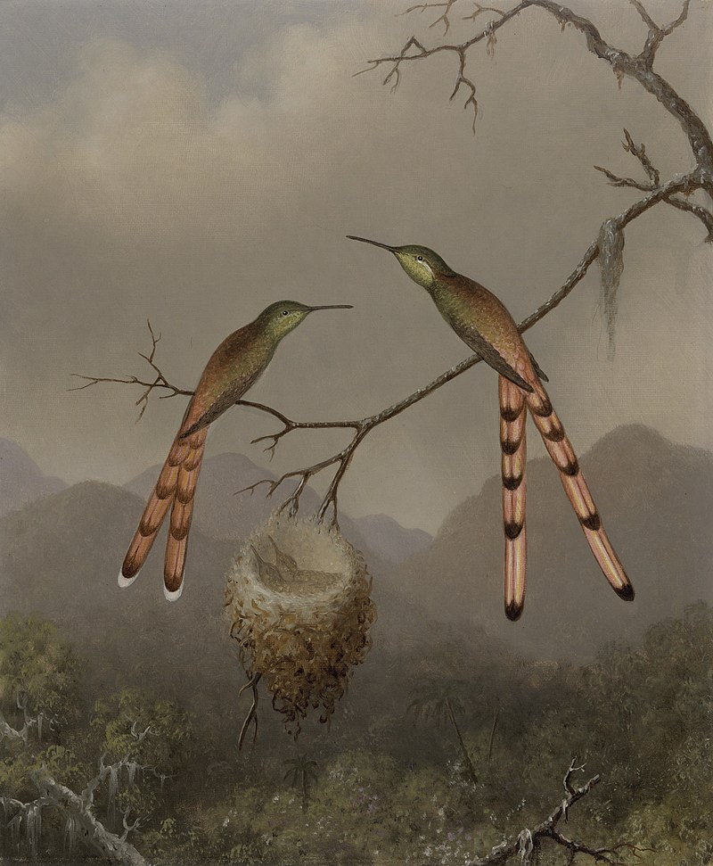 Martin Johnson Heade - Two Hummingbirds with Their Young - 2011.127.1 - Yale University Art Gallery.jpg