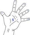 Measurements of the hand (Multiplication).png