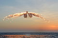 Merlin Helicopter Releasing Decoy Flares MOD 45154836.jpg
