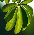 Miami - Fairchild Tropical Botanic Garden - (12259742215).jpg