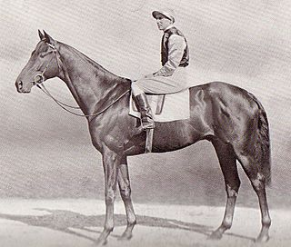 Mid-day Sun British-bred Thoroughbred racehorse