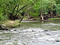 Mill Trail Umstead NC SP 4326 (6641034869) (2).jpg