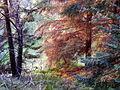 Millbuies Valley - geograph.org.uk - 1346532.jpg