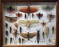 Missiemuseum Steyl-Tegelen, vlinders & geleedpotigen 06.jpg