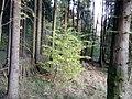 Moellerteich 558.jpg