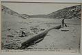Montebello Mast 1903.jpg