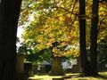 Morning Light through Trees in Riverside Cemetery, Waterbury.png