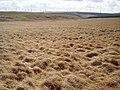 Mossy Burn - geograph.org.uk - 163420.jpg