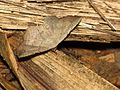 Moth - Flickr - treegrow (3).jpg