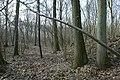Motte op de Butsberg te Tielt-Winge - 372326 - onroerenderfgoed.jpg