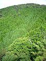 Mt nishiotafuku01s2816.jpg