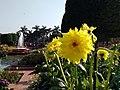 Mughal Garden, Rashtrapathi Bhavan - panoramio (8).jpg