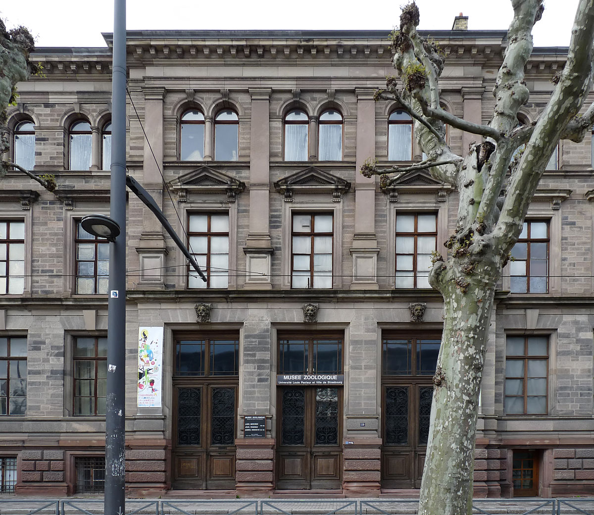 Mus e zoologique de la ville de strasbourg wikidata for Piscine de strasbourg