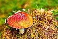 Mushrooms Of Finland (174072649).jpeg