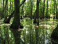 NatchezTraceParkway-Cypress Swamp2-Mile Post 122.jpg