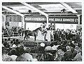 National Yearling Sales, Trentham, 1967 (3).jpg