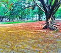 Natural Beauty of Dhaka University Campus.jpg