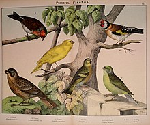 Natural history of the animal kingdom for the use of young people (Plate XVI) (5974951224).jpg