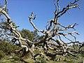 Nature - Natura (16171348556).jpg